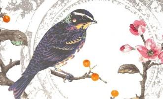 ili Stoff WONDERLAND opal Vögel Äste Beeren Blüten orange pink braun 1 by La Cassetta