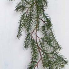 Tannengirlande Nordmann 180cm Deko Girlande Winter Weihnachten online kaufen